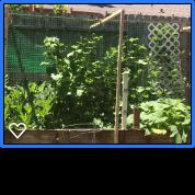 Garden, Business Growth, Life Coach, Prosper in ALL things, Brenda Byers